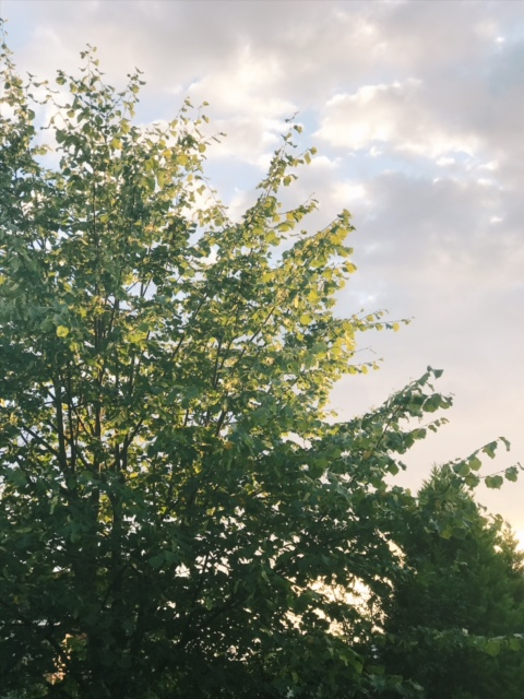 tree in sky